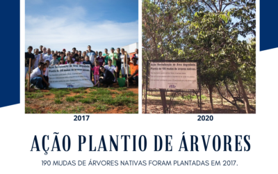Plantio de árvores nativas 2017 x 2020